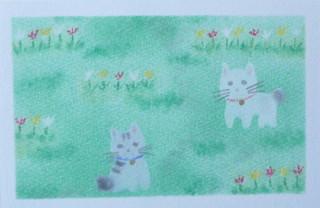 チューリップ畑のネコ